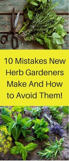 Fresh herbs are one of the greatest ways to increase the taste of your food healthfully. I often toss whatever leafy herbs are hand liberally into a salad to add unexpected variations in flavor (ba…