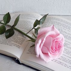 DESCRIPTION: Pink real touch flower rose are made of foam. Every petal formed by warm of hands. Then toned and included into a beautiful flower arrangement. Fake flowers in vase made to order. Creating of one pink rose stem will take about days. Artificial Flower Arrangements, Beautiful Flower Arrangements, Wedding Flower Arrangements, Artificial Flowers, Artificial Cactus, Fake Wedding Flowers, Fake Flowers, Exotic Flowers, Purple Flowers
