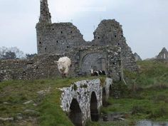 Traffic jam on the medieval bridge leading into Athassel Abbey Co Tipperary.