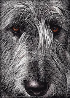 irish wolfhound art prints - Google Search