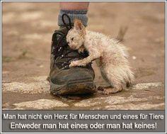 es ist traurig zu sehen wie dieses arme wesen leidet - http://www.juhuuuu.com/2013/12/18/es-ist-traurig-zu-sehen-wie-dieses-arme-wesen-leidet/