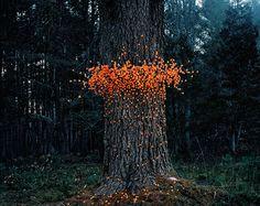 Emergent Behavior by photographer Thomas Jackson photography