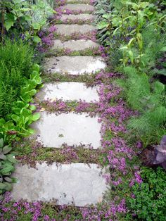 Creeping Thyme - Easy herbal ground cover. Drought tolerant, repels insects, and can even be used in cooking! Walkway Garden, Flagstone Pathway, Front Walkway, Outdoor Walkway, Front Steps, Walkway Ideas, Paver Walkway, Front Porch, Outdoor Decor