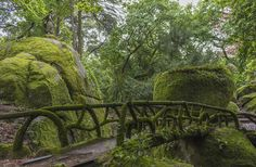 Green forest - A peaceful place into a small forest. LOOK FOR PEDRO PIRES, photographer. Beautiful work!