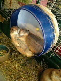 He is trying to think of a way to tell her she can't stay the night.