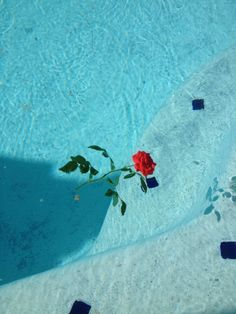 Rose water by jasoncampbellmalibu Aesthetic Grunge, Blue Aesthetic, Aesthetic Photo, Feeds Instagram, Looks Cool, Aesthetic Wallpapers, Photos, Pictures, Red Roses