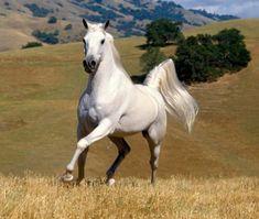 lindos cavalos de raça - Pesquisa Google