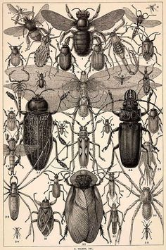 Wondrousstrange Design COTTON FABRIC Entomology Insects Bee Beetle x 11 fabric sheet. A public domain image Printed on cotton fabric with paper backing. Peel paper backing away and attach to your project. Hand wash or dry clean. x 11 inches. Science Illustration, Nature Illustration, Botanical Illustration, Engraving Illustration, Antique Illustration, Botanical Drawings, Creative Illustration, Posca Art, Beautiful Bugs