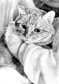 tabby cat art tabby cat print tabby pencil drawing cat art cat
