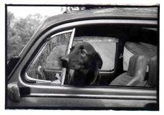 Cooder in Car