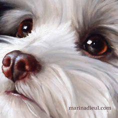 Detail: Portrait of Ponyo, oil painting. Little white dog painting, trompe-l'oeil. Détail du vendredi: Le portrait de Ponyo, huile. Marina Dieul