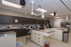 Veterinary hospital design
