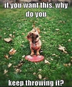 silly dog...