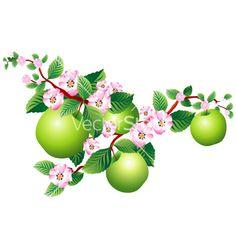 Apple blossom vector 43658 - by maystra on VectorStock®