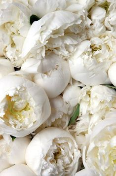 peonies, white...would love to bury my face in the sweet fragrance.