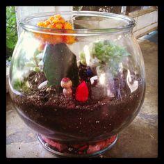 Newest succulent & cactus terrarium. - mine