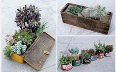 Clever ways to grow plants