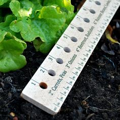 Seed Rule | Wooden Seed And Plant Spacing Ruler