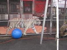 Ringling Bros. and Barnum & Bailey Circus' Boom-A-Ring: Animal Open House