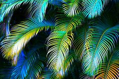Palm Leaves In Blue Photograph by Karon Melillo DeVega - Palm Leaves In Blue Fine Art Prints and Posters for Sale