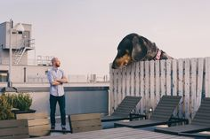 Vivian the Wiener Dog is Larger Than Life in These Extraordinary Photos - I Has A Hotdog - Dog Pictures - Funny pictures of dogs - Dog Memes - Puppy pictures - doge Giant Dogs, Big Dogs, Small Dogs, Tiny Dog, Hotdog Dog, Weenie Dogs, Dog Milk, Miniature Dogs, Funny Dog Pictures