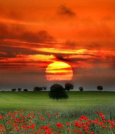 sunsurfer: Red Sunset, Tuscany photo by Nuno Milheiro All Nature, Amazing Nature, Science Nature, Beautiful World, Beautiful Places, Simply Beautiful, Absolutely Gorgeous, Cool Pictures, Beautiful Pictures