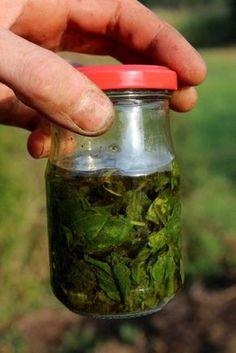 Conserver le basilic   Dans l'huile, en pesto, en glaçons ou séché
