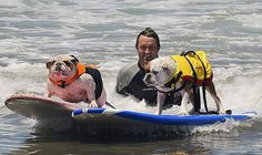 Two Dogs Surfing at the Loews Surf Dog Competition