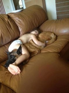 This German shepherd that will be the best kind of pillow to nap on.   27 Dogs That Will Do Anything ForKids