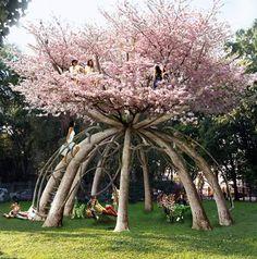 Uma casa-árvore com 100 anos :)