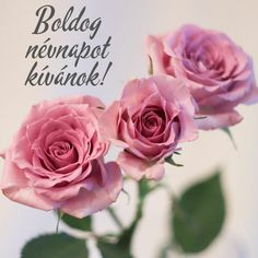 Name Day, Happy Birthday, Rose, Flowers, Plants, Cards, Google, Happy Brithday, Pink