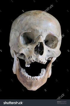 Skull Of The Person. Стоковые фотографии 64186897 : Shutterstock
