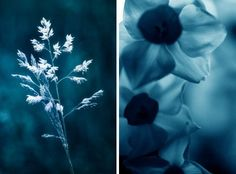 30 Colorful Works of Monochromatic Photography