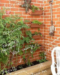 Profitez du retour des beaux jours pour faire votre potager ! Vertical Vegetable Gardens, Vegetable Garden Design, Garden Windows, Balcony Garden, Herb Garden, My Secret Garden, Garden Boxes, Hanging Plants, Plants Indoor