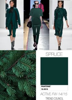 Spruce  colour trends F/W 14/15