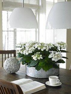 De Tuingids - Hortensia, Hydrangea in huis: Bloemrijke blikvanger