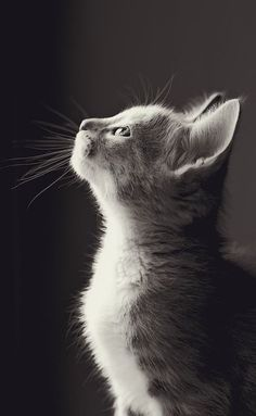 13 Rare Cats Photos From Around The World - Animal Photography - Chat Cute Cats And Kittens, I Love Cats, Kittens Cutest, Ragdoll Kittens, Tabby Cats, Bengal Cats, That's Love, Kitty Cats, Beautiful Cats