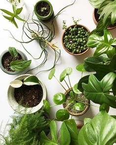 Awesome Houseplant Blog Clever Bloom