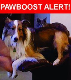 Please spread the word! Maverick was last seen in Goose Creek, SC 29445.    Nearest Address: Devon Forest in Goose Creek