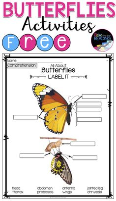 3 FREE Butterflies Activities perfect for butterflies research, an insects unit, nonfiction reading comprehension, or guided reading groups! Butterflies Printables | Butterflies Worksheets | Insects Printables | Insects Worksheets | Insects Activities | Insects Graphic Organizers