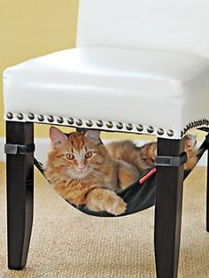 zoom inzoom controlszoom outzoom reset Share with a friend Pinterest Email to a friendEmail to a Friend Recently Viewed /p/floating-hammock-premium/51956.uts  Floating Hammock - Premium Cat Hammock $39.98 Write a review