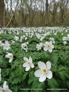 Crafty Salutations: Another walk in Ploughman's wood