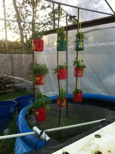 Aquaponic gardening- someday DIY