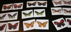Butterfly Matching Cards