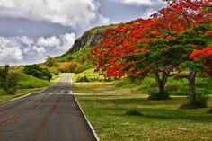 The road to Suicide Cliff, north of Saipan. Photo: Antonio Cabrera