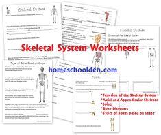 SkeletalSystemWorksheets