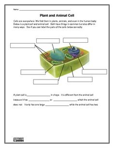 Plant and Animal Cell Worksheet (Homeschool Science) Science Cells, Science Biology, Teaching Biology, Life Science, Plant Science, Science Worksheets, Science Resources, Science Lessons, Science For Kids