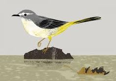 Image result for grey wagtail illustration