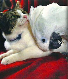 Dieser Blog kümmert sich ja von Beginn an u.a. um ungewöhnliche Freundschaften zwischen Katzen und anderen Tieren. Auf dem Catwalk findet man in der Kategorie Bilaterale Beziehungen allerlei Artike…