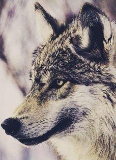 Wolf's profile..